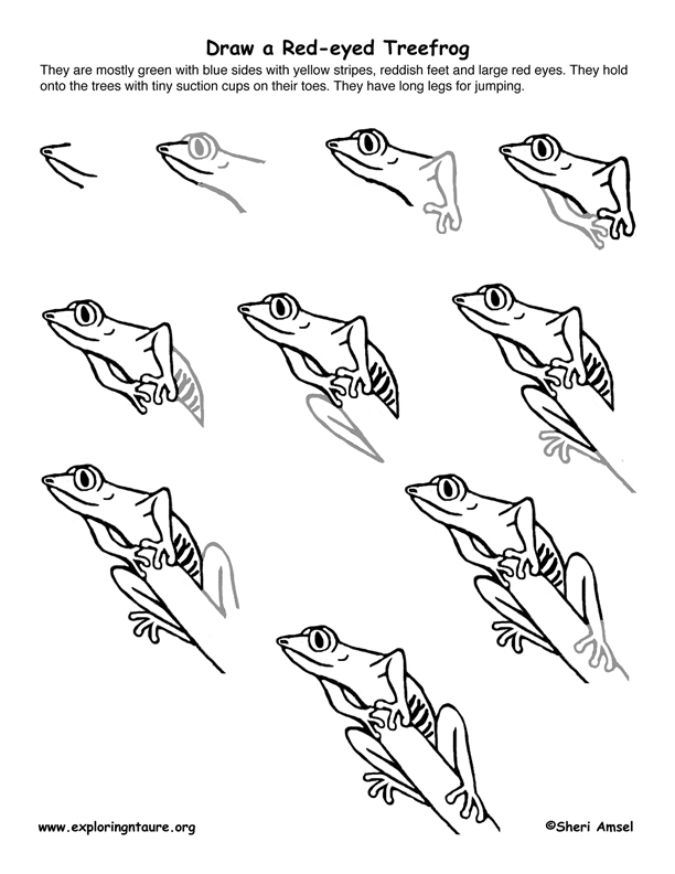 Red-eyed Treefrog Drawing Lesson