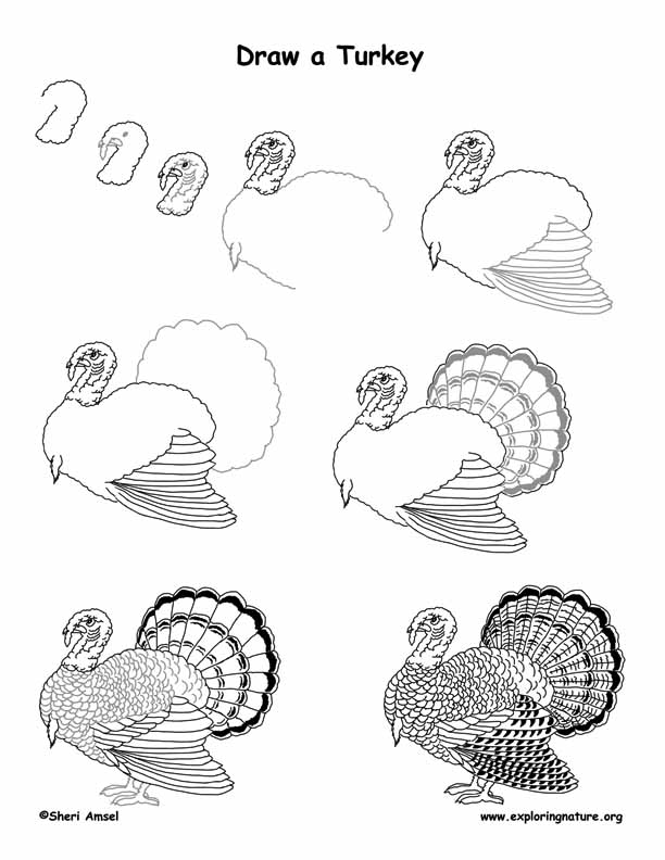 Turkey Drawing Lesson