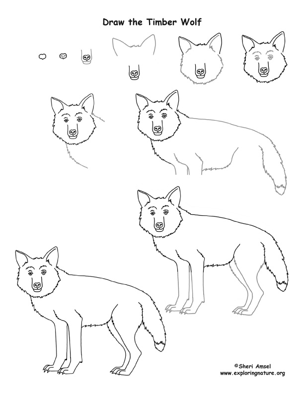 Wolf (Timber) Drawing Lesson