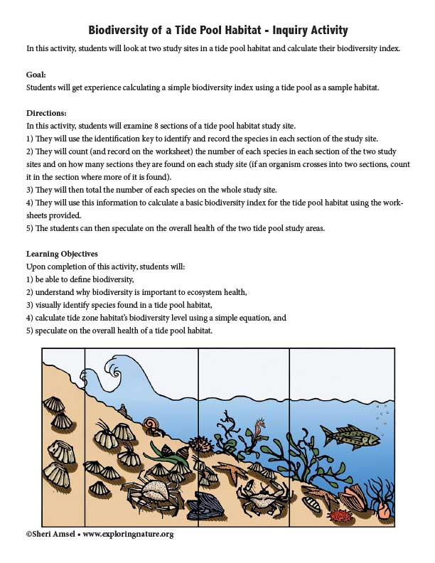 Biodiversity of a Tide Pool Habitat - Inquiry Activity