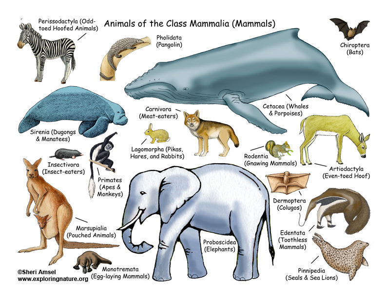 All About Mammals - Lecture