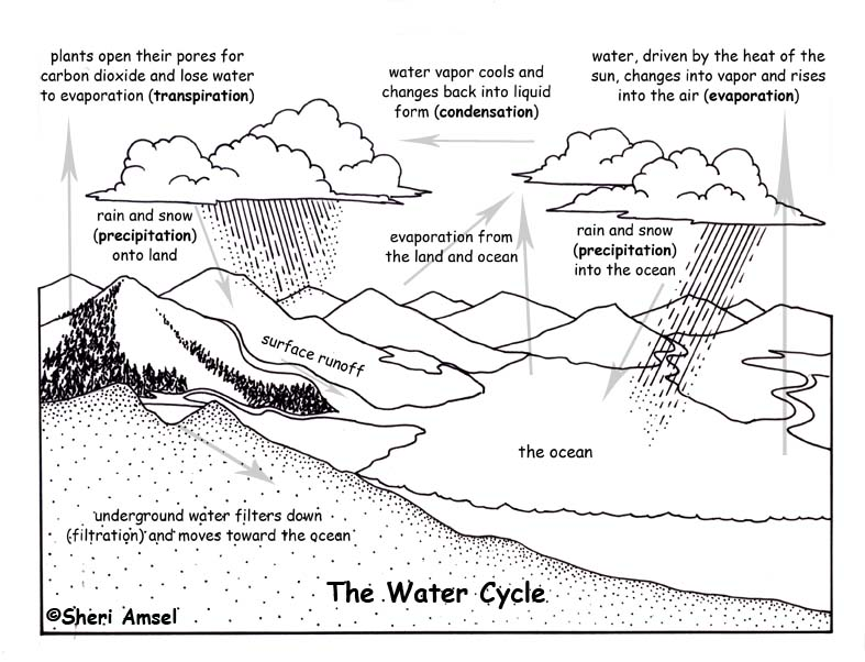 Gallery For gt Water Cycle Diagram Kids Black And White