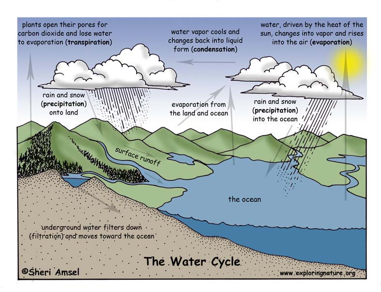 Water Cycle Illustrated and Labeled