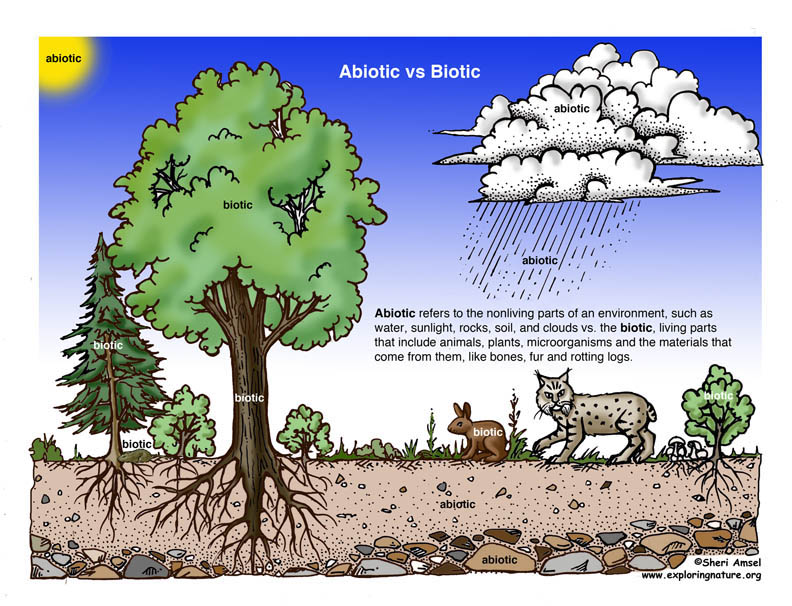 Biotic vs. Abiotic Illustrated and Described