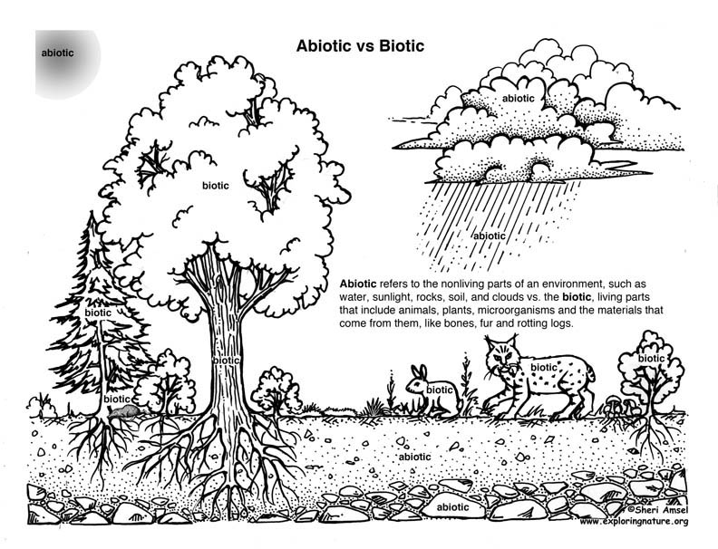 Biotic (Living) Vs. ABiotic (Nonliving) Activity