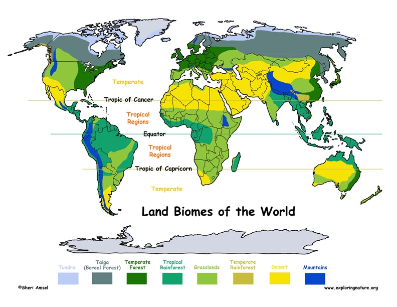 Biome Locations on Earth Illustrated and Labeled