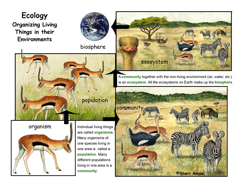 What is Ecology? A Descripiton and illustrated Poster