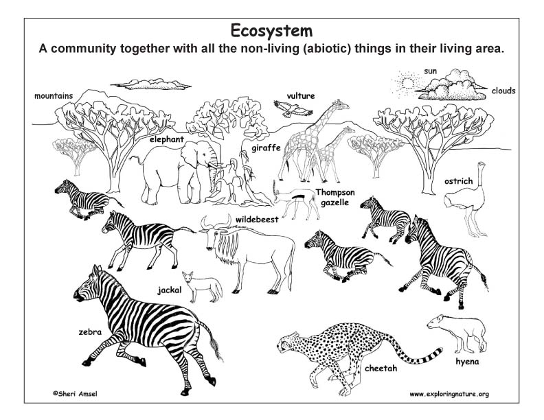 Ecology and Ecosystems (Young Students)