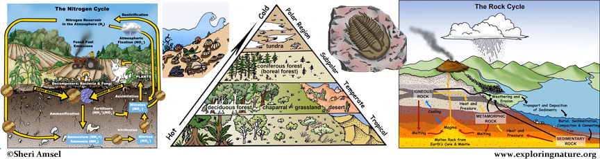 Ecology header