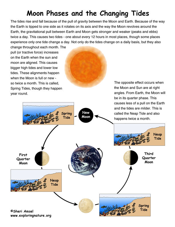 Moon Phases & Tide Changes Illustrated and Labeled