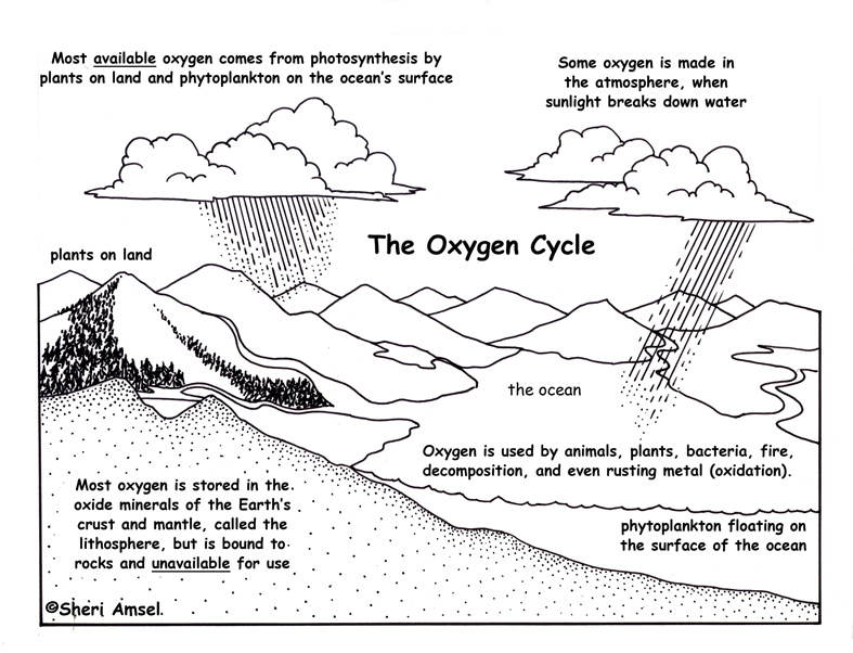 Cycle description and assessment oxygen cycle description and assessment ccuart Choice Image