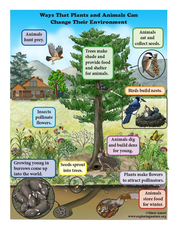 How Plants and Animals Affect the Environment (Kindergarten) - Reading and Poster