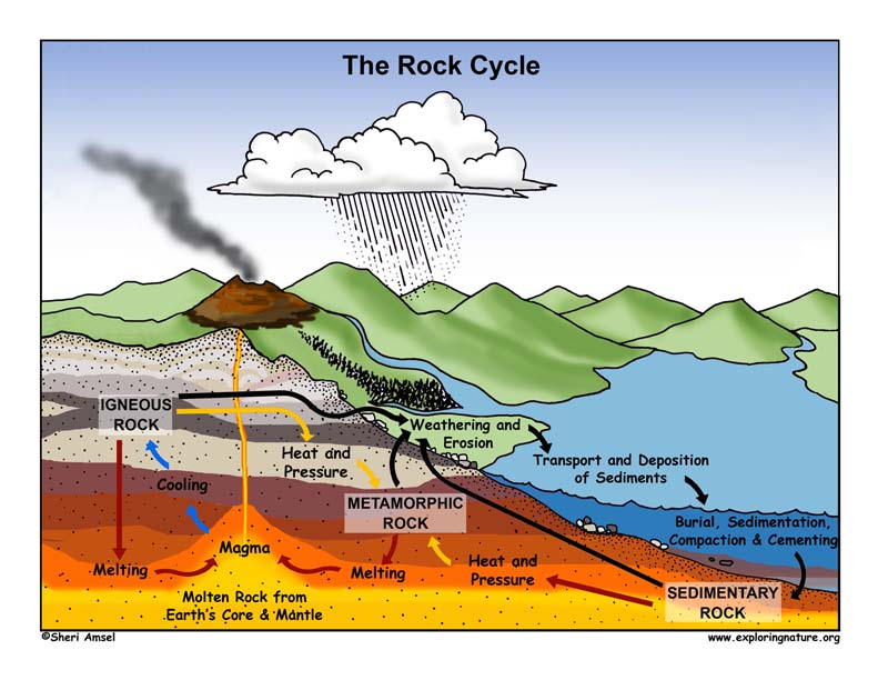 Rock Cycle Illustrated and Labeled
