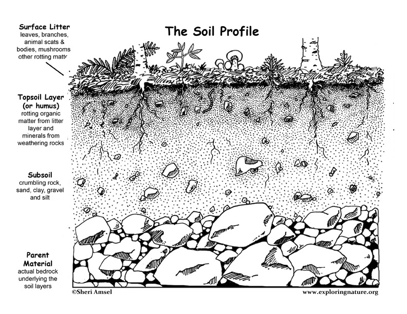Pics for soil profile for kids for What is soil for kids