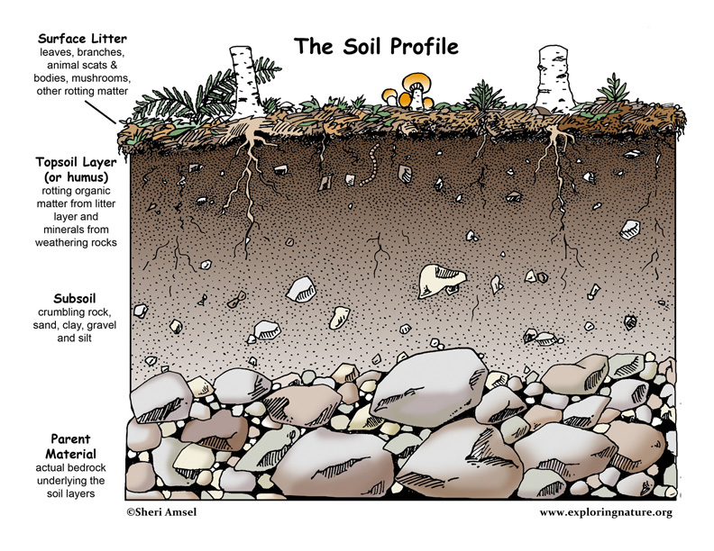 Soil Profile Illustrated and Labeled