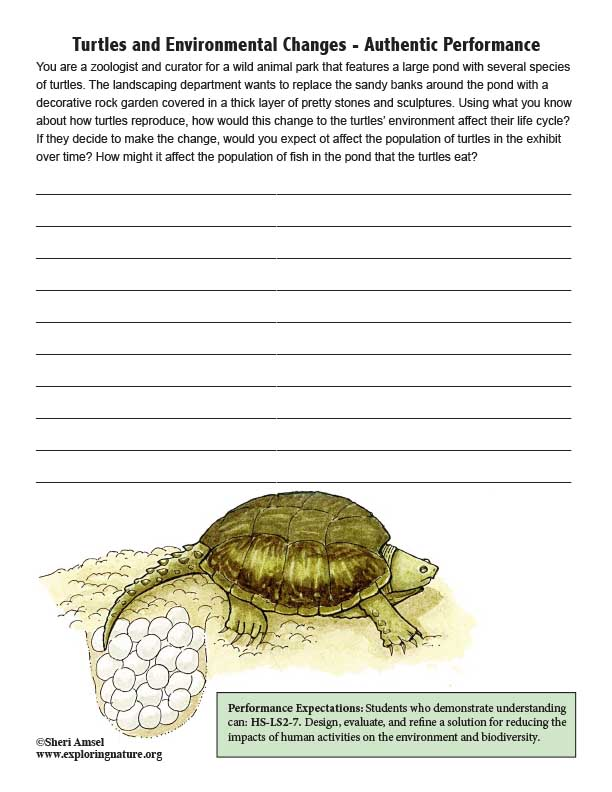 Turtles and Environmental Changes - Authentic Performance