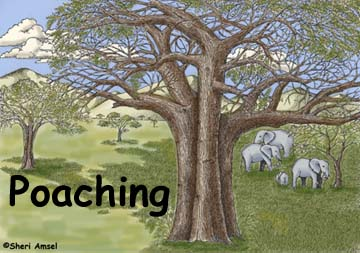 Poaching of Endangered Animals
