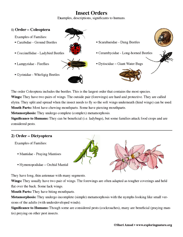 insect orders  grade 7