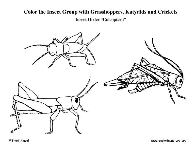 insect orders and families pdf
