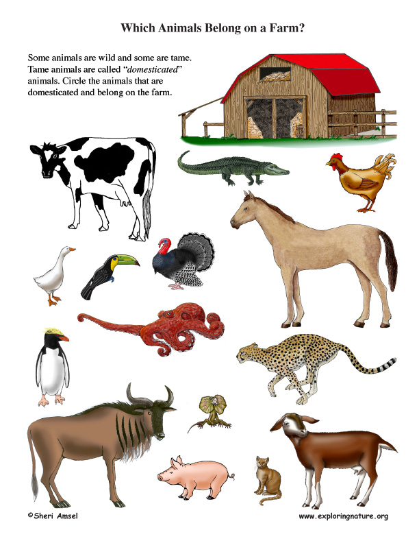 Which Animal Belongs on a Farm? Farm Animals Activities