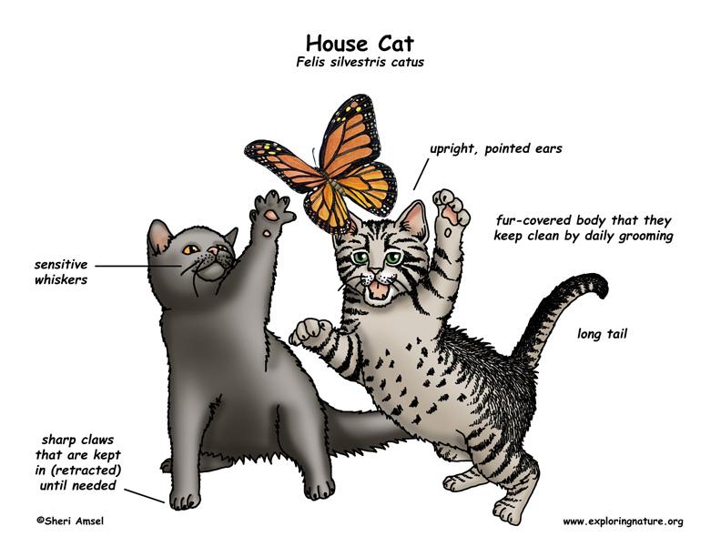 Cat Exploring Nature Educational Resource