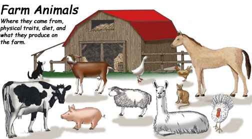 Farm Animals (and Pets)
