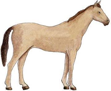 horse exploring nature educational resource female horse 360x295