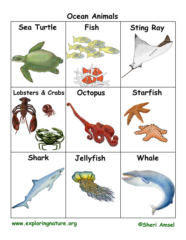 Image of: Baby Names Exploring Nature Ocean Animal Flashcards