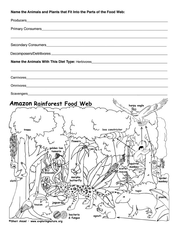 Printables Food Web Worksheets food webs worksheets plustheapp amazon rainforest web activity