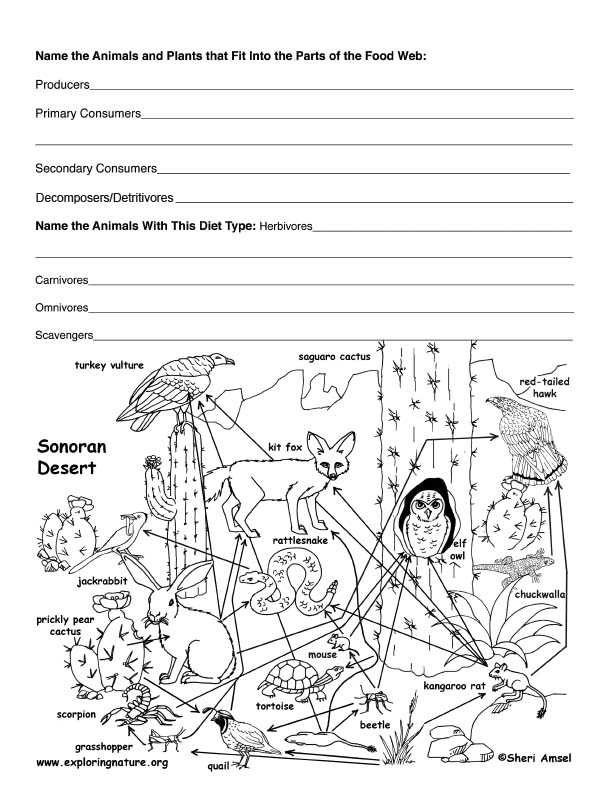 Worksheets Create A Food Web Worksheet desert food web activity