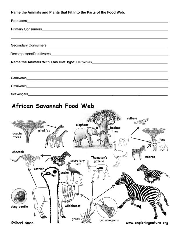 african savannah food web activity. Black Bedroom Furniture Sets. Home Design Ideas