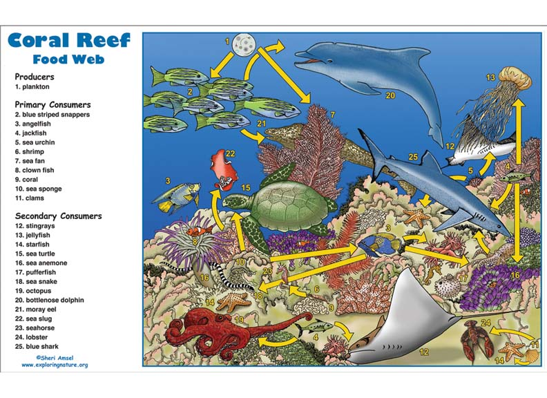 Coral Reef Food Web Activity