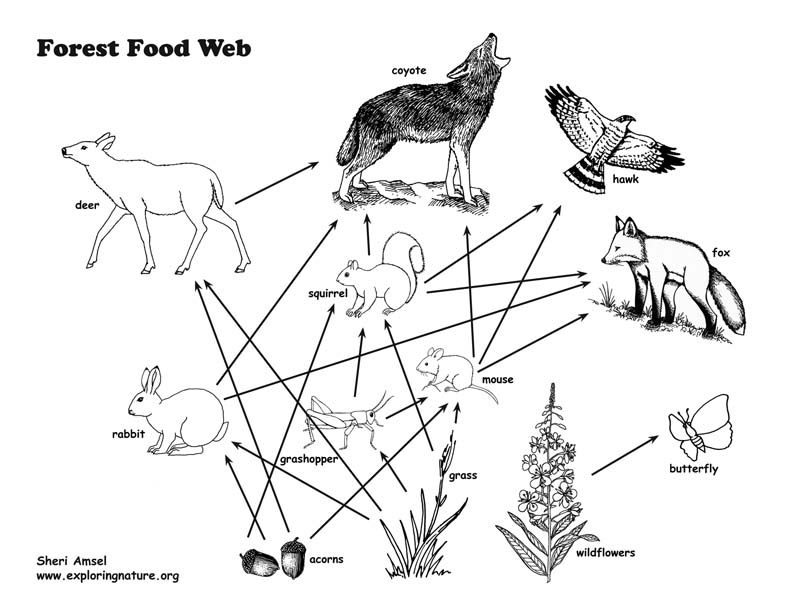 food web activity and teaching visual aid  models