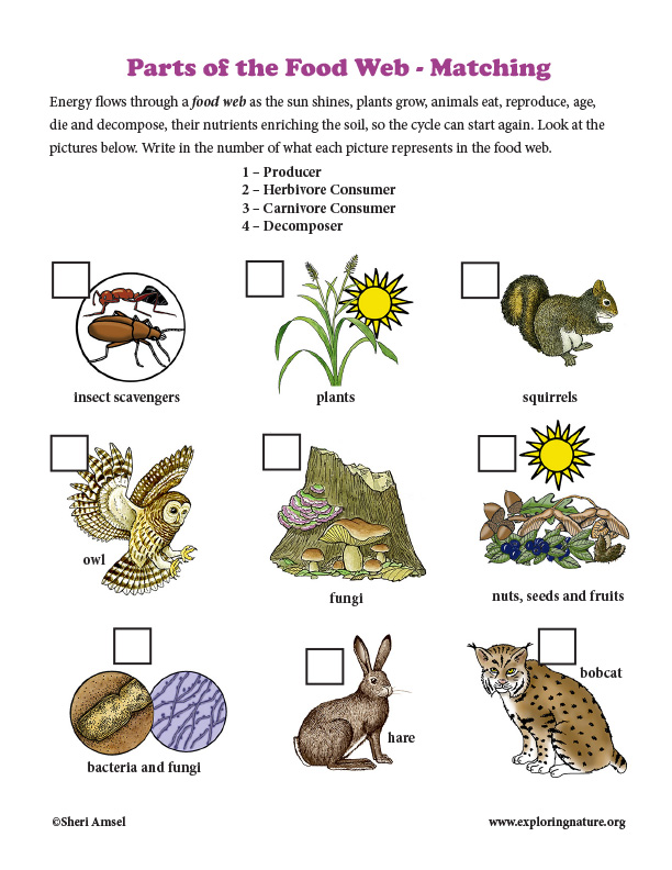 Parts of a Food Web - Matching