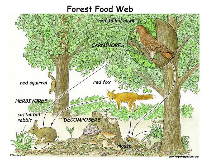 Food Web Handouts