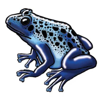 Frog (Blue Poison Dart)