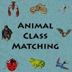 Match the Animals to Their Class