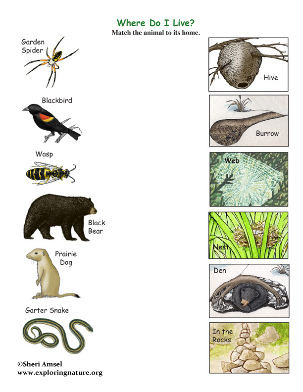 pictures of animals and their homes. Match the Animals to Their Homes Game -- Exploring Nature Educational