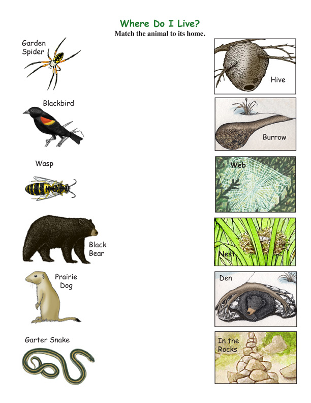 ... com/wp-content/themes/titan/mother-and-baby-animals-matching-worksheet