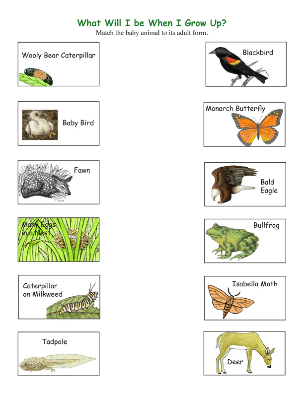 ... Kindergarten Spelling Worksheets. on beginner science worksheets