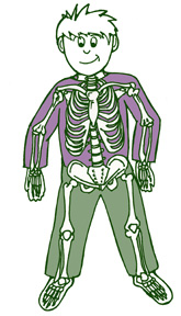 Anatomy Games