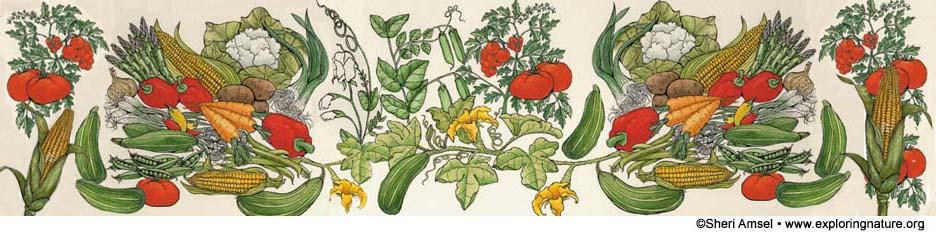 Gardening Header Picture, garden, growing vegetables,