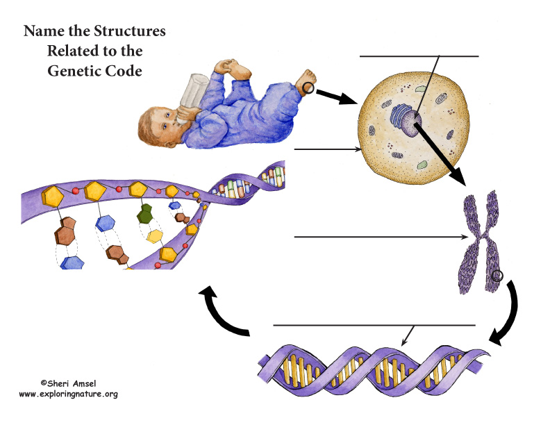 Genetic Code Structures - Labeling