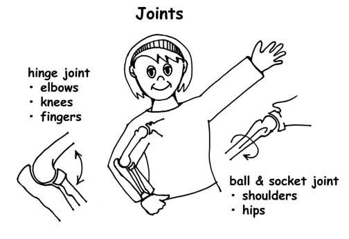and socket joint, Human Body
