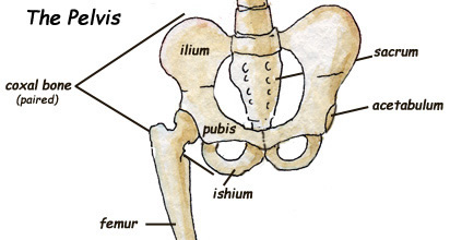 pelvis Online Mla Format Example on for video, internal citation, outline template, resource page, poem essay, for websites, paper parts, table contents, introduction essay, cited source list,