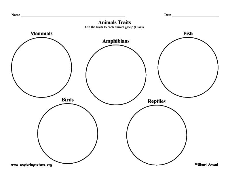 Graphic Organizer - Animal Traits