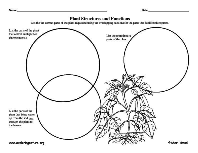 Graphic organizer plant structures