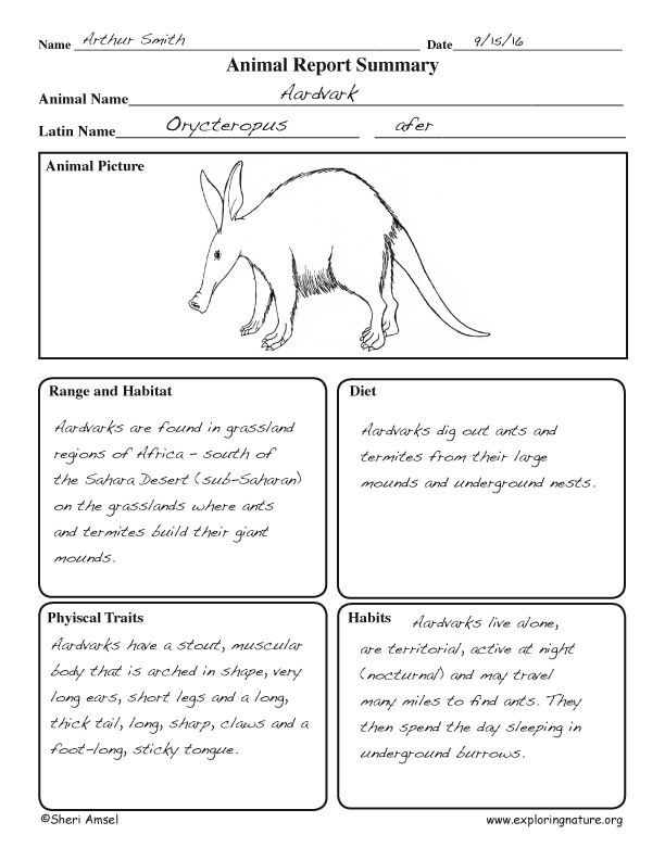 Animal Graphic - Animal Report Graphic Org Sample