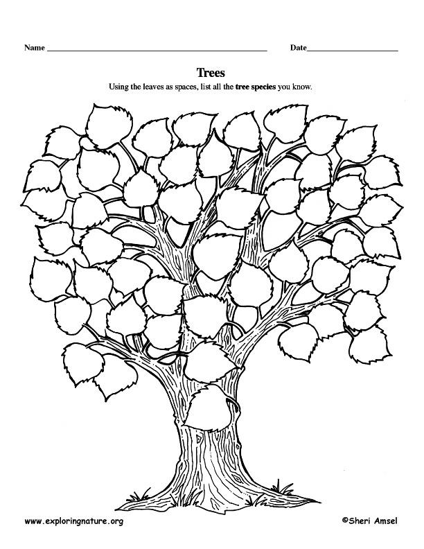 Graphic Organizer - Tree List