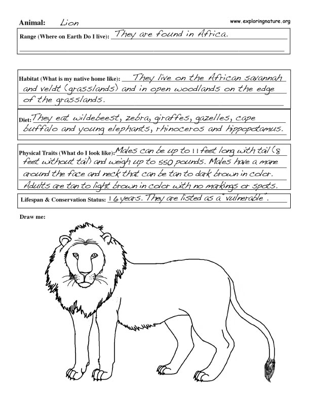 Zook Book graphic organizer